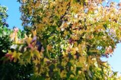 llego el otoño 16