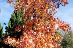 llego el otoño 10