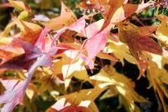 llego el otoño 11