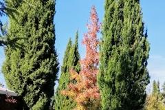 llego el otoño 14