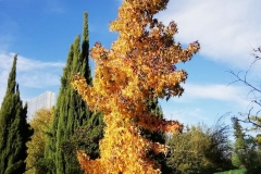 llego el otoño 17