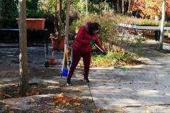 llego el otoño 2