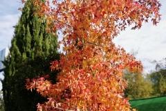 llego el otoño 9